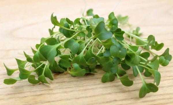 brokkoli mikrozöld