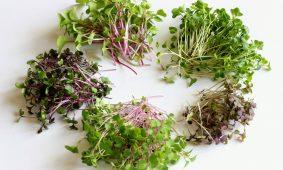 Vegyszermentes, vitamdús mikrozöldek az ablakpárkányodról
