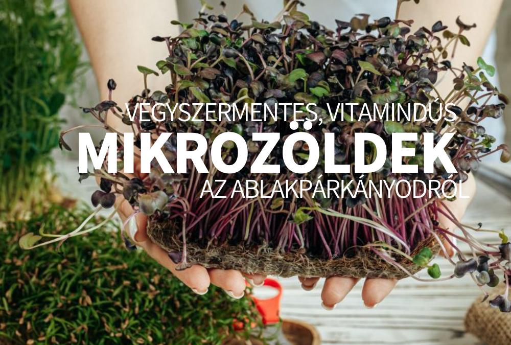 Vegyszermentes, vitamindús mikrozöldek az ablakpárkányodról