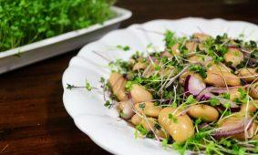 Tízperces fehérbab saláta mikrozöld mix-szel