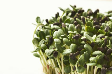 napraforgó mikrozöld saláta