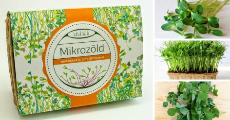 mikrozöld ültetőcsomag salátalap mix