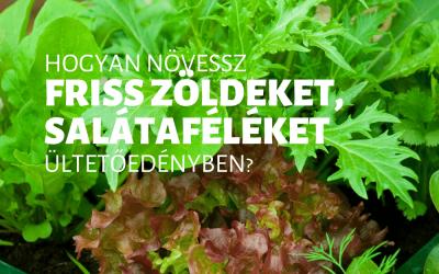 Hogyan növessz friss zöldeket, salátaféléket ültetőedényben?
