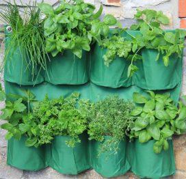 ültetőedény fűszernövényekhez