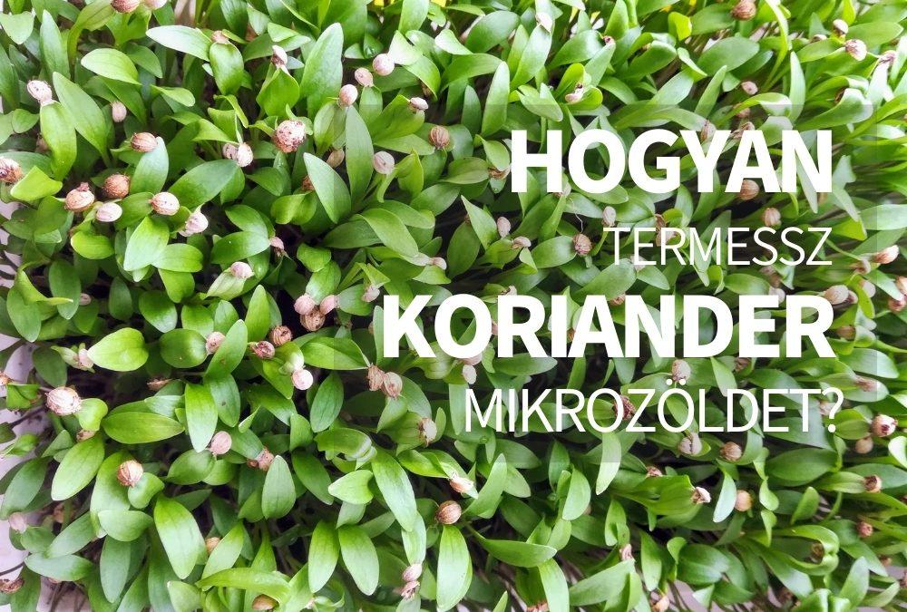 Hogyan termessz koriander mikrozöldet egész évben?